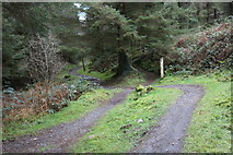 NX4464 : Trail to the Visitor Centre, Kirroughtree Forest by Billy McCrorie
