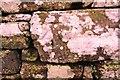 NY5329 : Benchmark on roadside dry stone wall at Carleton Brow by Luke Shaw