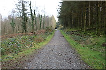 NX4464 : Forest Trail on Daltamie Hill, Kirroughtree by Billy McCrorie