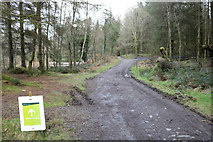 NX4465 : White Diversion Trail passing Little Bruntis by Billy McCrorie