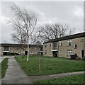 TL4756 : Lichfield Road: Storm Ciara bending birches by John Sutton