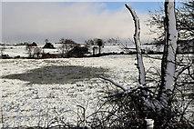 H5559 : Wet spot in field, Tycanny by Kenneth  Allen
