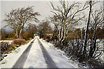 H5559 : Tycanny Road by Kenneth  Allen