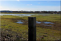ST3186 : Waterlogged land west of Mendalgief Road, Newport by Jaggery