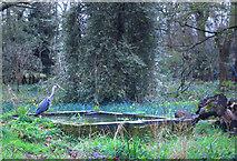 TQ2479 : Heron in Holland Park by Des Blenkinsopp