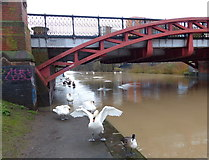 SK5803 : Mill Lane bridge No 110 crossing the Grand Union Canal, Leicester by Mat Fascione
