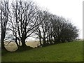 SX5591 : Hedgebank and trees on South Down by David Smith