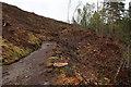 NN8166 : Felled area by Falls of Bruar by Hugh Venables