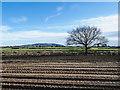 SJ5912 : Tractor wheel ruts on bare earth by Trevor Littlewood