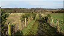 NJ1362 : Carsehill Path by Anne Burgess