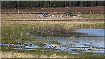 NJ1561 : Waterlogged Land by Anne Burgess