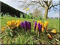 SU5886 : Purple and yellow by Bill Nicholls