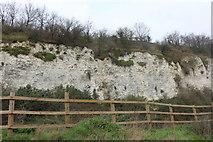 TQ6078 : Grays chalk quarry nature reserve by David Howard
