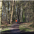J4881 : Woodland path, Bangor by Rossographer