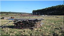 NJ1264 : Wood Pile by Anne Burgess