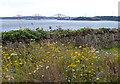 NT1582 : Wildflowers along the Fife Coastal Path by Mat Fascione