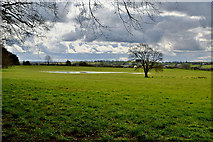 H5472 : Pond and tree, Bracky by Kenneth  Allen