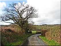 SS7316 : Sharp bend on the lane to Week by Roger Cornfoot