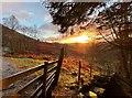 NS4291 : Early morning sun by Bill Kasman