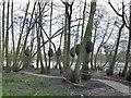 SJ8639 : Trentham Gardens: peardrop sculptures by Stephen Craven