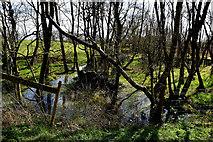H5172 : Marshy ground, Cloghfin by Kenneth  Allen