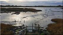 TM2222 : Kirby-le-Soken: Salt marsh and creeks north of Kirby Quay by Nigel Cox