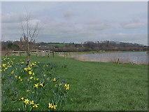 SK6443 : The River Trent near Burton Joyce by Tim Glover