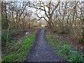 TQ5336 : Muddy Woodland Path by John P Reeves