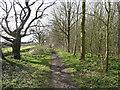 TL2228 : The Hertfordshire Way, Graveley by Humphrey Bolton
