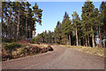 NH4838 : Track junction, Boblainy Forest by Craig Wallace