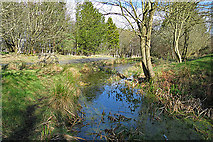 NJ9402 : Pond on Stoney Hill by Anne Burgess