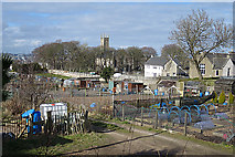 NJ9403 : Nigg Allotments by Anne Burgess