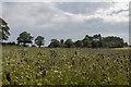 NO6851 : A field of wildflowers near Red Castle by Adrian Diack