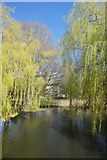 SE6250 : Willows from Spring Lane Bridge by DS Pugh