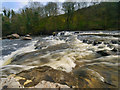 SE0088 : River Ure, Aysgarth Falls by David Dixon