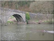 SO5074 : Mallards by Dinham Bridge (Ludlow) by Fabian Musto