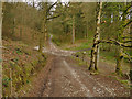 SE0856 : Tracks near the edge of Laund Pasture Plantation by Stephen Craven