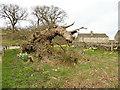 SE0756 : The Laund Oak, fallen by Stephen Craven