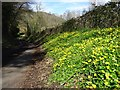 SO7640 : Springtime roadside flowers by Philip Halling