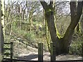 SJ9594 : Access to Gower Hey Wood by Gerald England