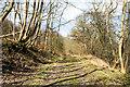NZ0935 : Dirt road as route of Weardale Way by Trevor Littlewood