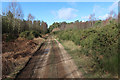 TL7490 : Track in Thetford Forest by Hugh Venables