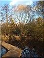 TQ5682 : Boardwalk in Running Water Wood by Glyn Baker