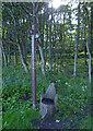 NT3395 : Crowpark Wood along the Fife Coastal Path by Mat Fascione