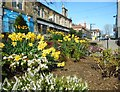 NS5574 : Spring flowers, Milngavie by Richard Sutcliffe