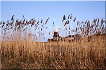 TG0444 : Cley Windmill seen through the reeds by Colin Park