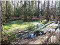 NY9463 : Pond in Gallowsbank Wood by Oliver Dixon