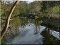 SE2635 : Former mill pond, St Ann's Mills by Stephen Craven