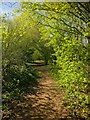 SJ7251 : Woodland Footpath by Scott Robinson