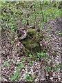 TF0820 : Moss on a stump by Bob Harvey